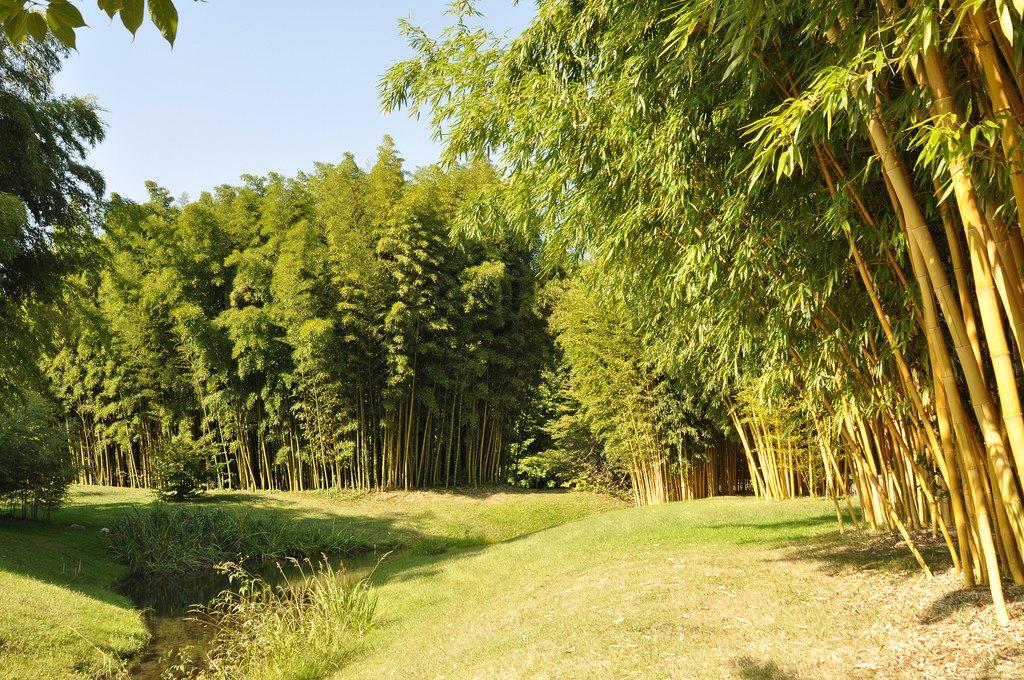 Bambouseraie d'Anduze