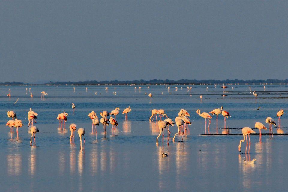 Le parc naturel régional de Camargue 3