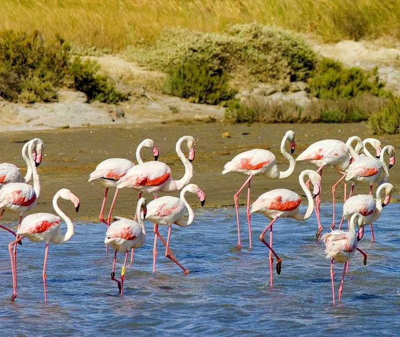 Le parc naturel régional de Camargue 5